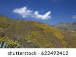 Small photo of Central Gran Canaria in April, abundant spring flowering
