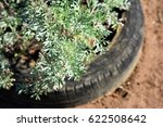 Small photo of Artemisia tree absinthium in the garden
