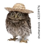 young owl wearing a hat in... | Shutterstock . vector #62259976