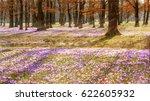 beautiful colorful magic... | Shutterstock . vector #622605932