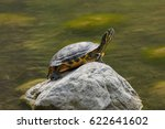 Turtle Rest On Rock At Sun On...
