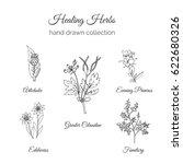 herbs illustration. handdrawn... | Shutterstock . vector #622680326