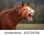 laughing horse in a field | Shutterstock . vector #622729256