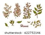 medicinal plants vector set.... | Shutterstock .eps vector #622752146