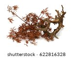 yellow dry pine twigs isolated... | Shutterstock . vector #622816328