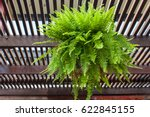 Fern Shrub Hangs On Balcony's...