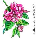 pink camellia flower blossom.... | Shutterstock . vector #622942742
