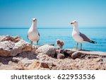 bird's nest on the atlantic... | Shutterstock . vector #622953536