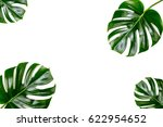 tropical jungle monstera leaves ... | Shutterstock . vector #622954652