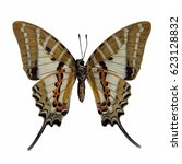 Small photo of Butterfly stuff : Spotted Swordtail (Graphium nomius)