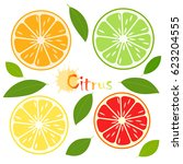 citrus slice with green leaves  ... | Shutterstock .eps vector #623204555
