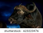 cape buffalo at night  low key... | Shutterstock . vector #623223476