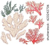 hand drawn underwater natural... | Shutterstock .eps vector #623242736