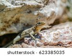 lizard sunbathing | Shutterstock . vector #623385035