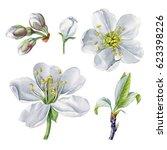 watercolor hand painted cherry... | Shutterstock . vector #623398226