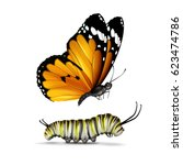 vector realistic plain tiger or ... | Shutterstock .eps vector #623474786