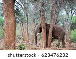 Elephant Hiding Behind Two Tin...