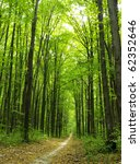 green enchanted forest path | Shutterstock . vector #62352646