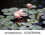 Pink Flowers In Lily Pads