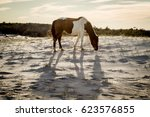 Wild Horse On The Beach During...