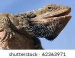australian bearded dragon  an...   Shutterstock . vector #62363971