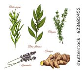 herbs and spices vector... | Shutterstock .eps vector #623682452