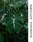 Leaves Of Alocasia And Palm...