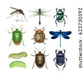 vector set of different insects ... | Shutterstock .eps vector #623730392