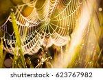 spider's web on morning rays... | Shutterstock . vector #623767982