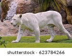 Very Rare White Tiger  Panther...