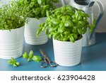 fresh basil thyme herb in a pot   Shutterstock . vector #623904428