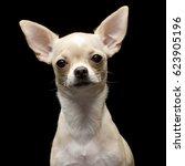 portrait of an adorable... | Shutterstock . vector #623905196