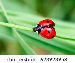 macro photo of ladybug in the... | Shutterstock . vector #623923958