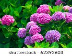 Stock photo rhododendron 62392603