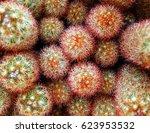 color macro cactus photography | Shutterstock . vector #623953532