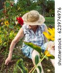 senior woman is gardening in... | Shutterstock . vector #623974976