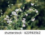 Small photo of Alcea pallida pink flowers