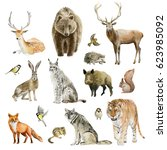 Stock photo clipboard set of watercolor hand drawn group of animal cliparts birds predators and preys grass 623985092