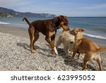 group of dogs on the beach    Shutterstock . vector #623995052