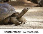 Giant Turtles  Dipsochelys...