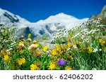 Alpine meadow closeup to the background GrossÂ?glockner. Austria - stock photo