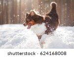 Active Dog Australian Shepherd...
