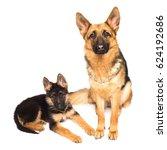 adult german shepherd and puppy ... | Shutterstock . vector #624192686
