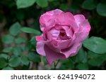 pink rose   Shutterstock . vector #624194072