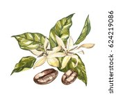 Flowers Coffee Arabica Beans...