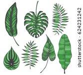 palm leaves set. vector... | Shutterstock .eps vector #624231242