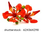 beautiful delonix regia flowers ... | Shutterstock . vector #624364298