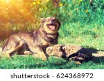 dog and cat best friends... | Shutterstock . vector #624368972