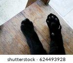 Stock photo black cat s paws 624493928