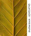 leaf texture  leaf background...   Shutterstock . vector #624514745